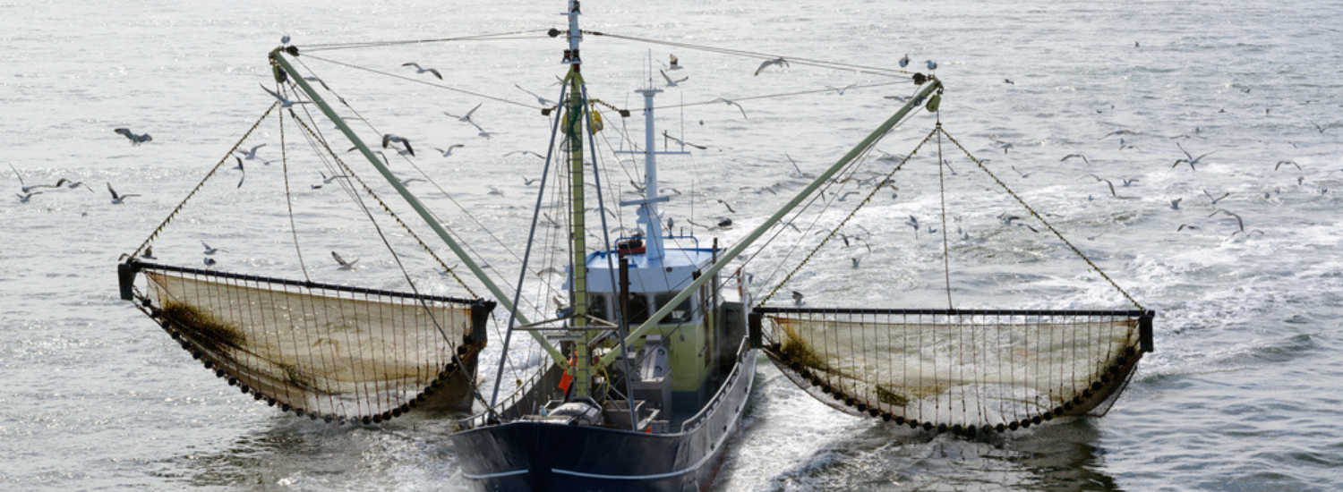 Marine Stewardship Council responde a Netflix sobre documental de pesca